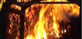 Bossagebrand aan lijzijde