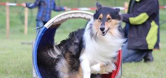 Het HSVD Hondenfestival gezellig en druk bezocht